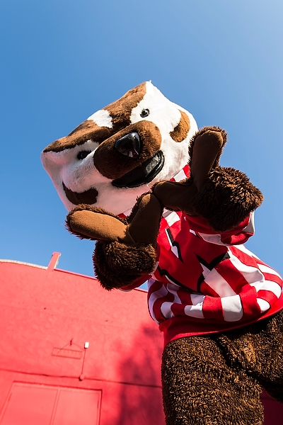 """Bucky Badger holding up """"W"""" sign"""